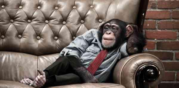 تکنیک مدیریت زمان - میمون پیش چه کسی است؟
