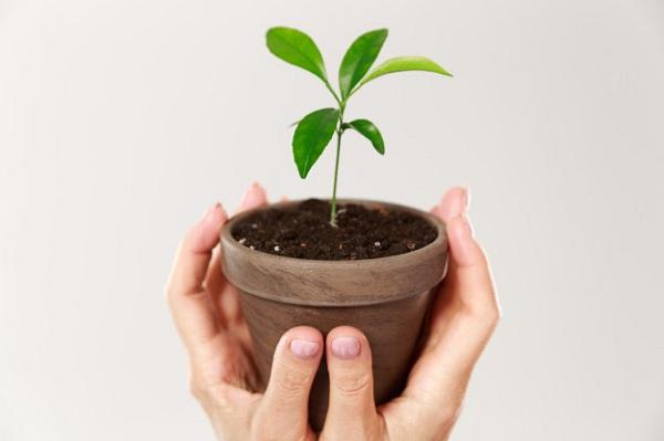 مدیریت دورکاری با بهره بردن از طراوت گیاهان